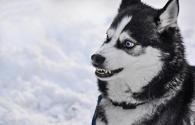 Prečo niektoré psy neznášajú deti