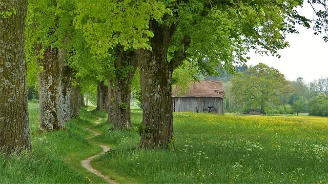 Tieň poskytujúci strom.jpg