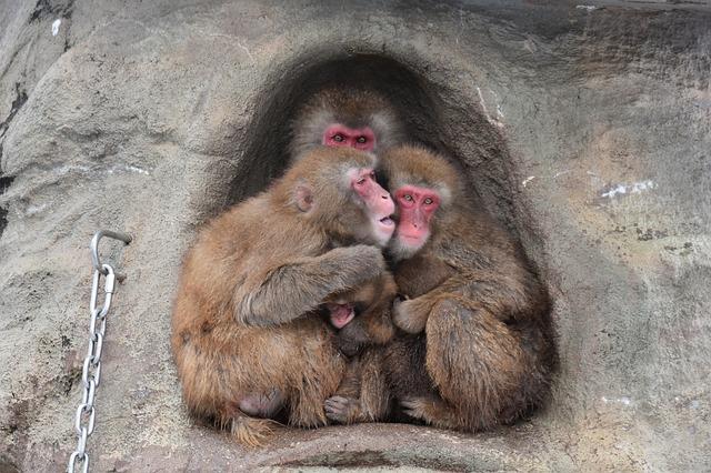 Opičia rodinka.jpg